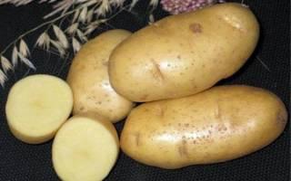 10 лучших сортов картофеля для средней полосы — рейтинг 2020