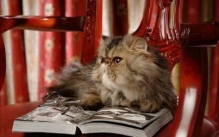 10 самых умных пород кошек — рейтинг 2020