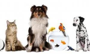 5 лучших ветеринарных клиник Ярославля – рейтинг 2020