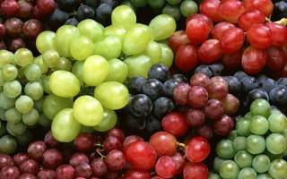 16 лучших сортов винограда для Подмосковья — рейтинг 2020