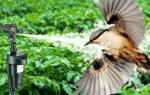 15 лучших отпугивателей птиц – рейтинг 2020