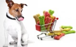 5 лучших лакомств для собак — рейтинг 2020