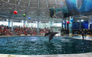 5 лучших дельфинариев Крыма — рейтинг (Топ-5)