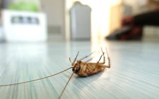 18 лучших средств от тараканов – рейтинг 2020