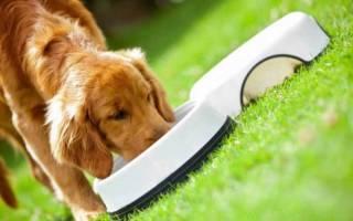 10 лучших кормов для собак холистик класса — рейтинг 2018