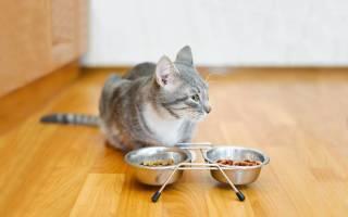 10 лучших кормов для пожилых кошек — рейтинг 2020