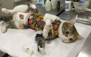 10 лучших кормов для стерилизованных кошек — рейтинг 2020