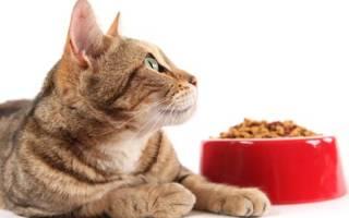 10 лучших кормов для шотландских кошек — рейтинг 2020