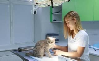 10 лучших ветеринарных клиник Москвы – рейтинг 2020