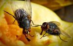 15 лучших средств от мух — рейтинг 2020