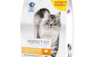 10 лучших кормов для кошек с чувствительным пищеварением — рейтинг 2020