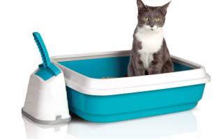 5 лучших закрытых туалетов для кошек — рейтинг 2020